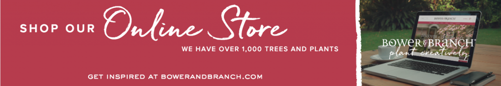 Shop Bower & Branch