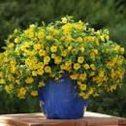 "12"" Hanging Baskets Combinations (Sun) $39.95"